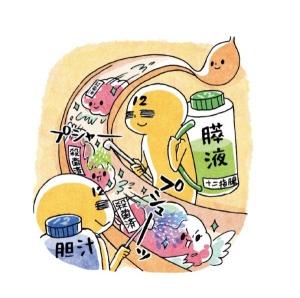 膵液・胆汁