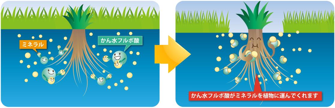 鹹水フルボ酸 ミネラル