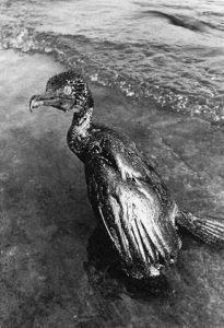 湾岸戦争 水鳥