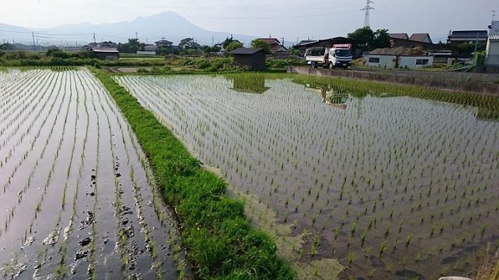 2019年の田植え