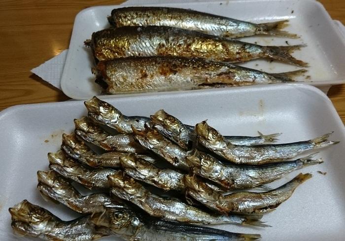 焼きたて青魚パラダイス