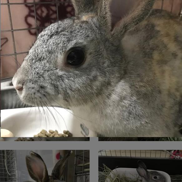 Screenshot_2019-07-28 まルく ウサギデザインさん( usagi design) • Instagram写真と動画