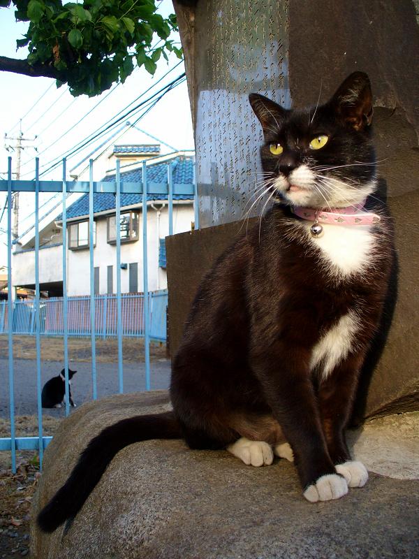 石碑に立ってる黒白猫1