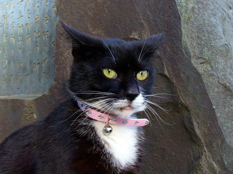 石碑に立ってる黒白猫2