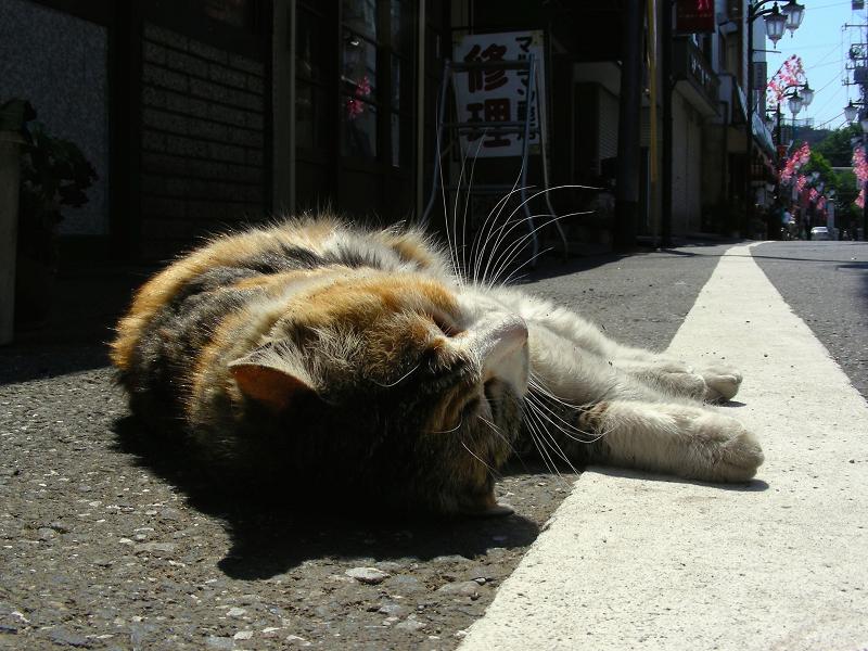 商店街の三毛猫3