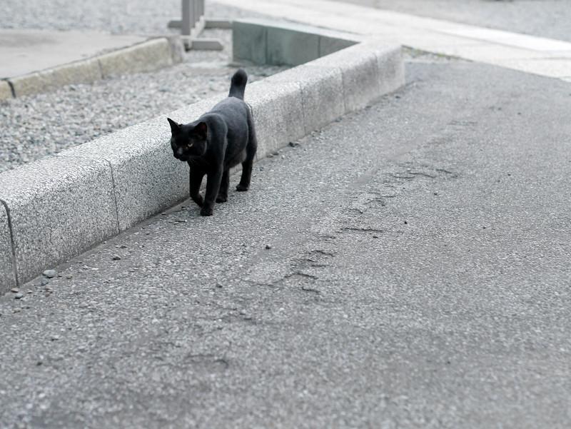 境内を歩く黒猫1