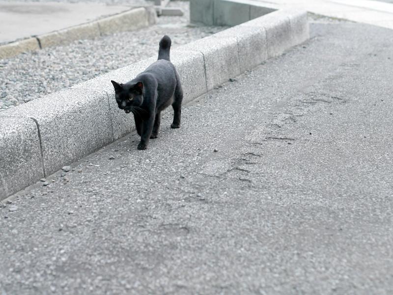 境内を歩く黒猫2
