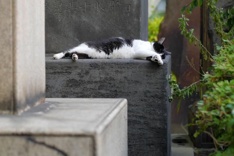 石碑で寝ている白黒猫1