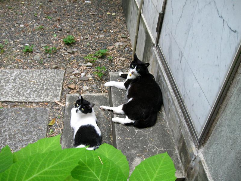 お堂の裏の猫2匹1