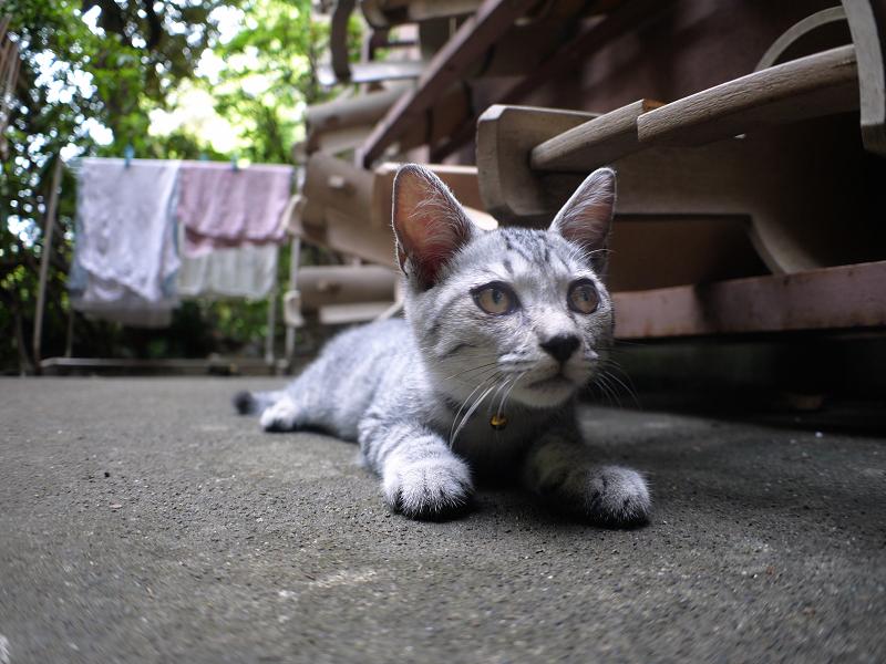 桶とサバトラ仔猫1