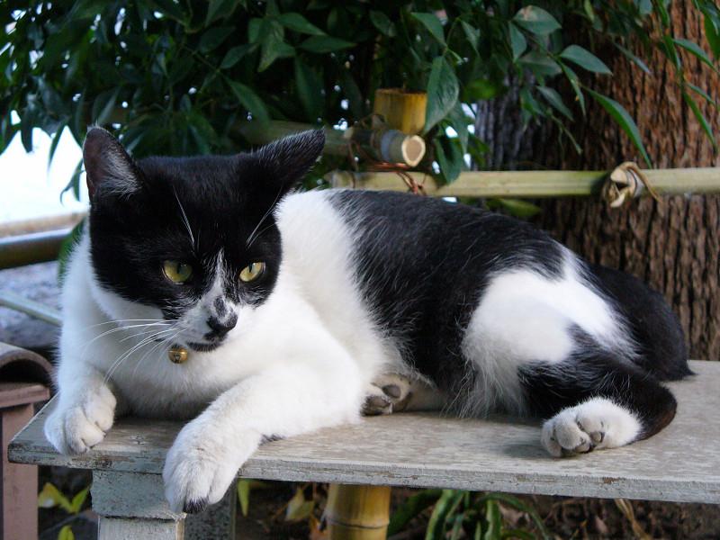 ベンチ上の白黒猫1