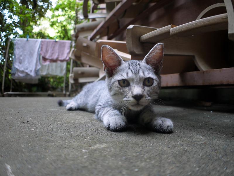 桶とサバトラ仔猫2