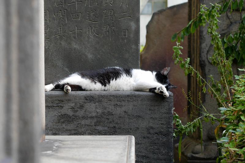 石碑で寝ている白黒猫2