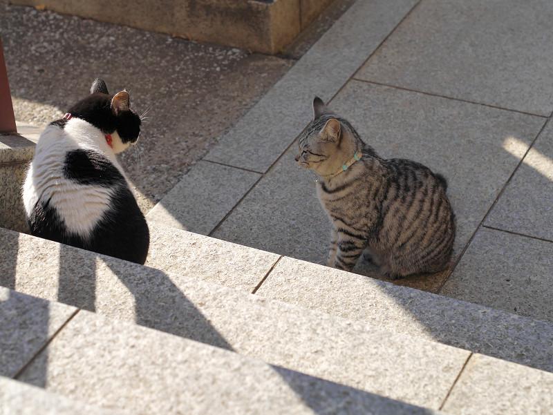 睨んでる黒白猫
