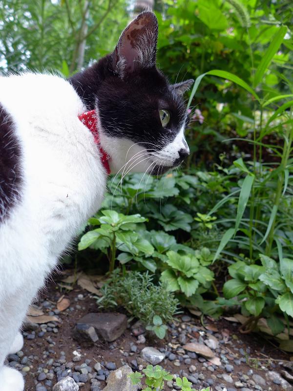 白黒猫の後ろ姿3