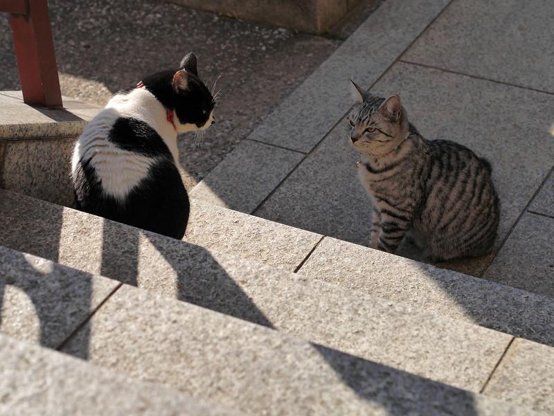 睨まれてるサバトラ猫
