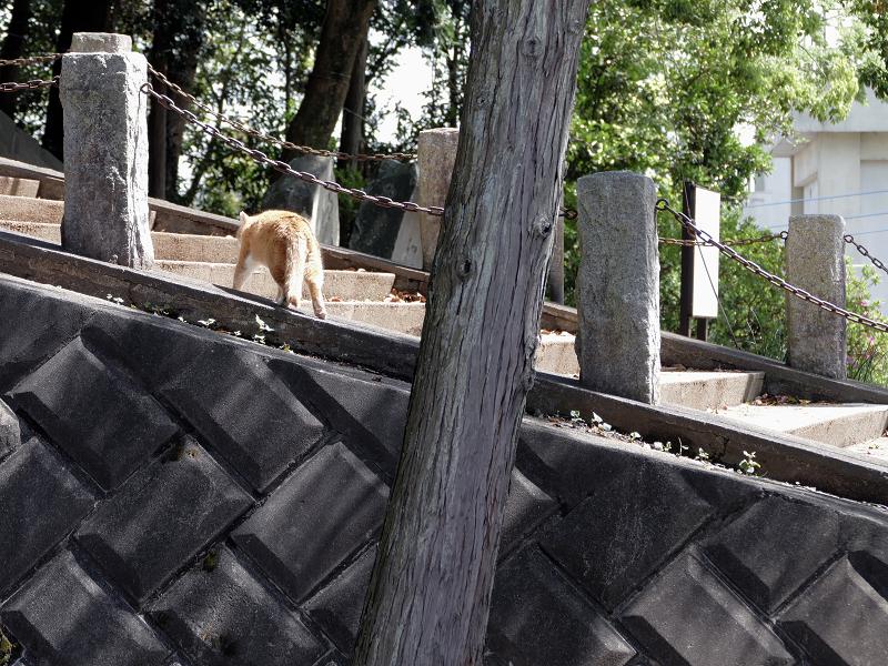 階段を歩く茶白猫1