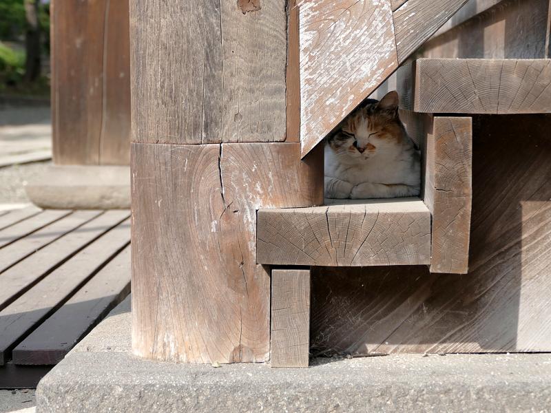 お堂階段で寝ている三毛猫