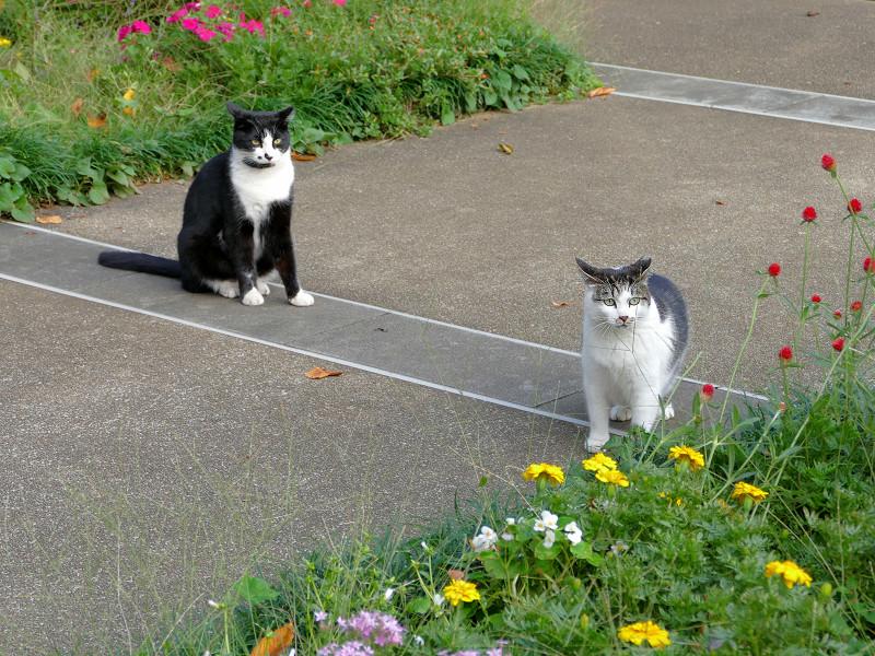 公園の猫たち1