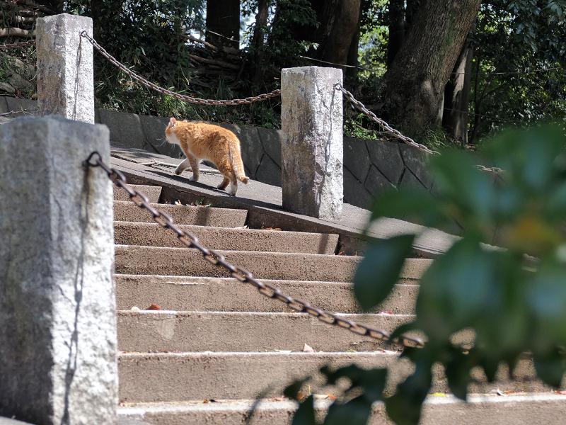 階段を歩く茶白猫2
