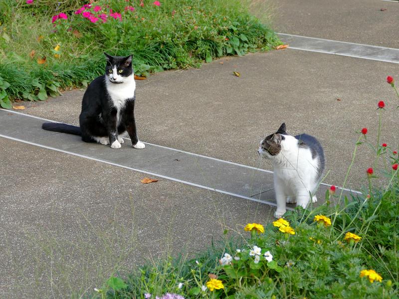 公園の猫たち2