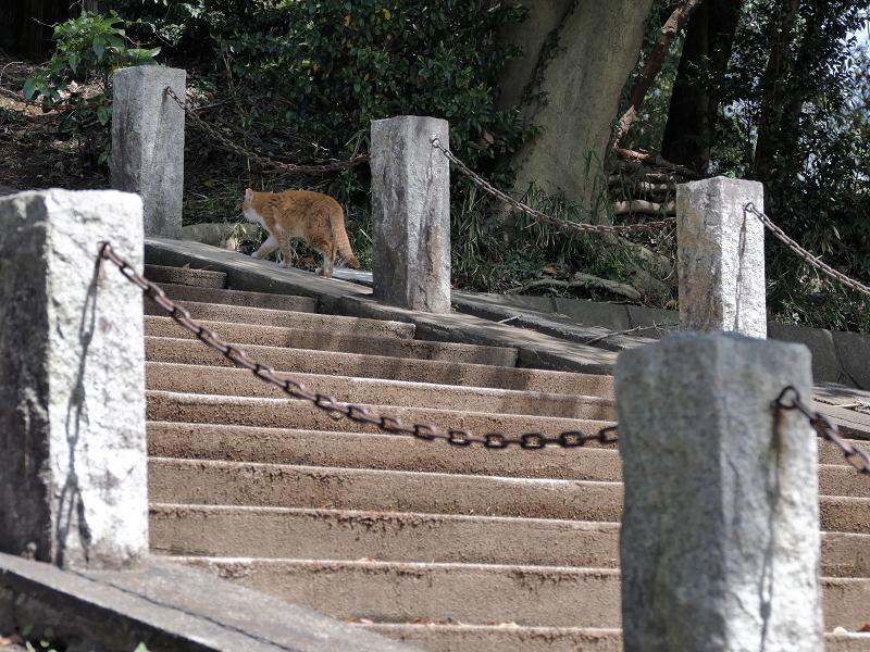 階段を歩く茶白猫3