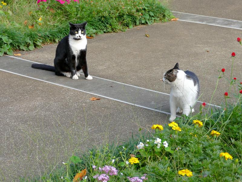 公園の猫たち3