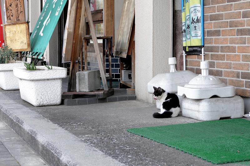 店先の猫たち1
