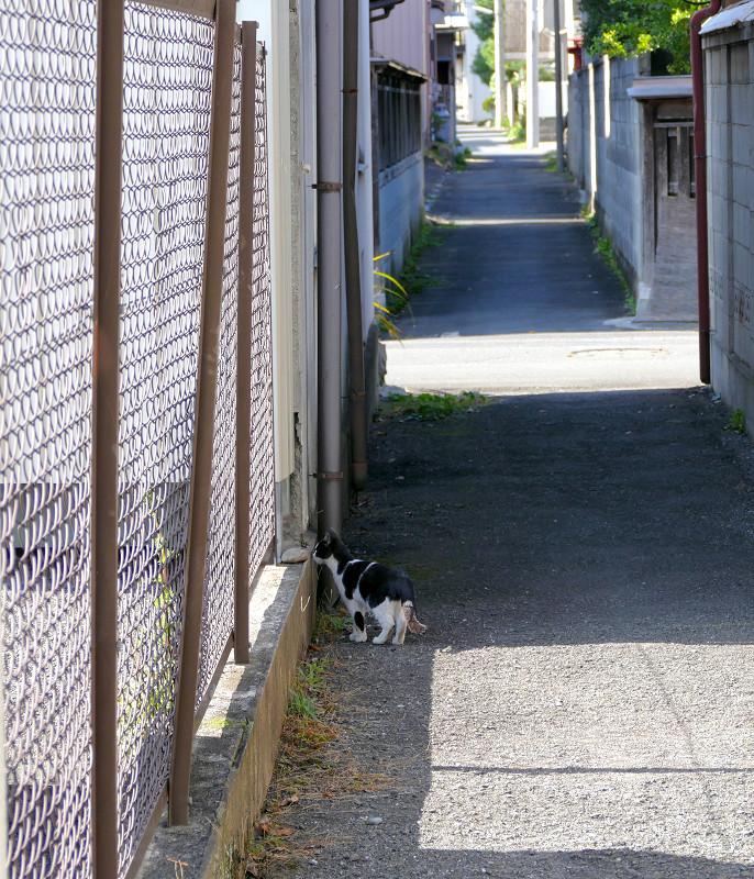 金網を潜る黒猫1