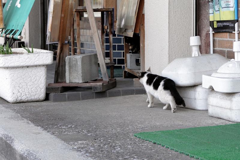 店先の猫たち2