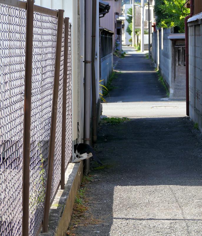 金網を潜る黒猫2