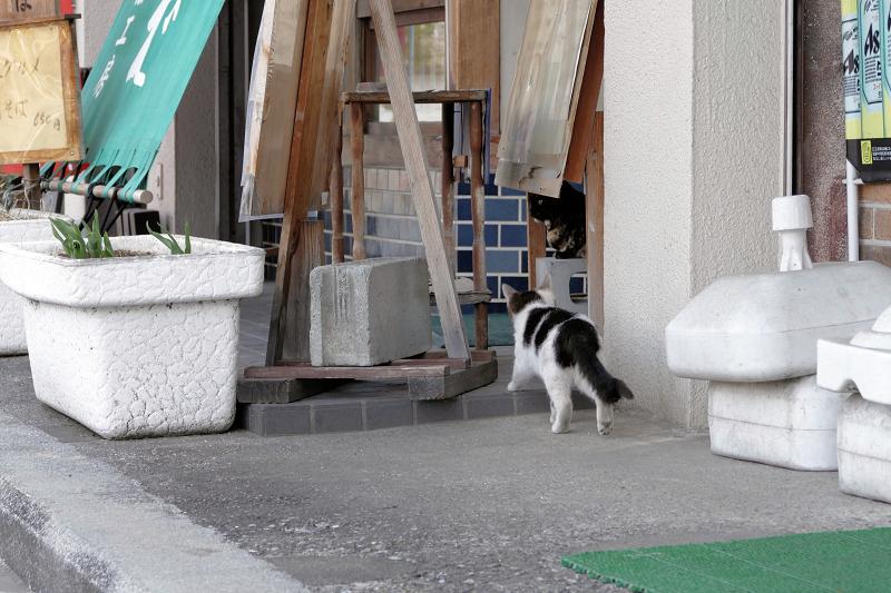 店先の猫たち3