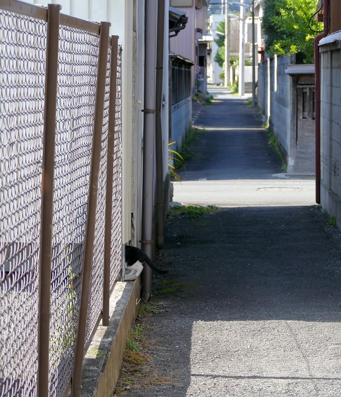 金網を潜る黒猫3