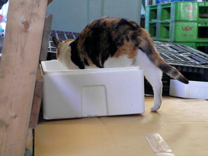 発泡スチロールと三毛猫4