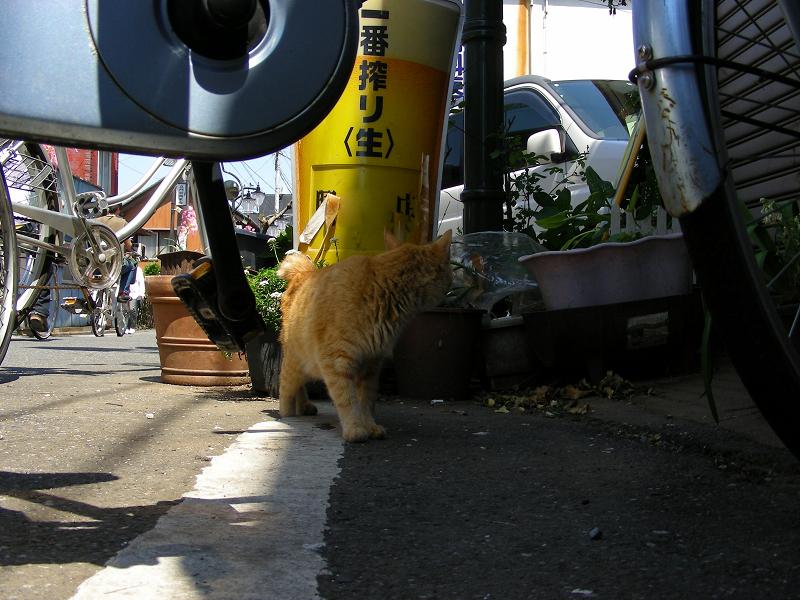 寄って来た茶トラ猫1