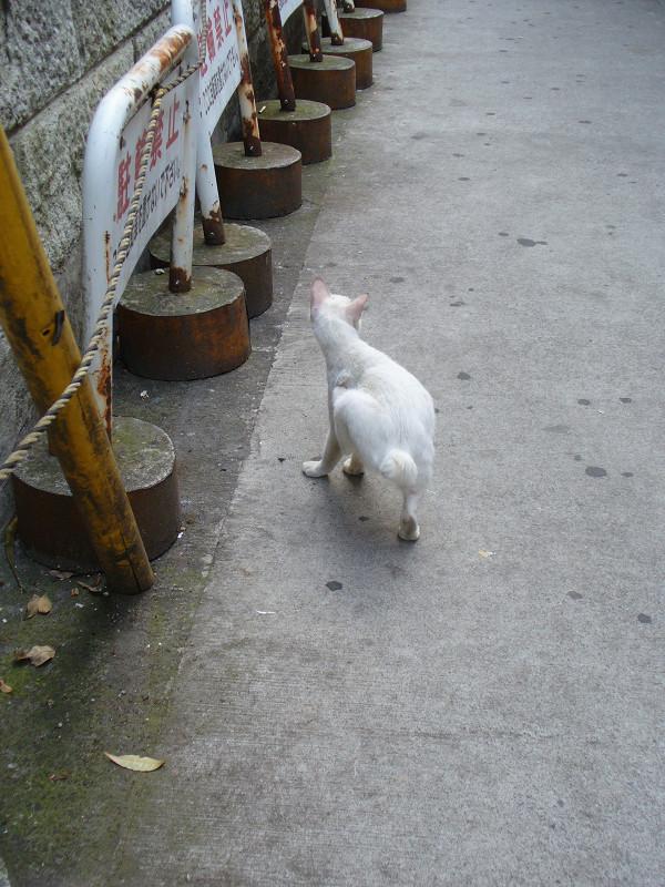 カキカキする白猫