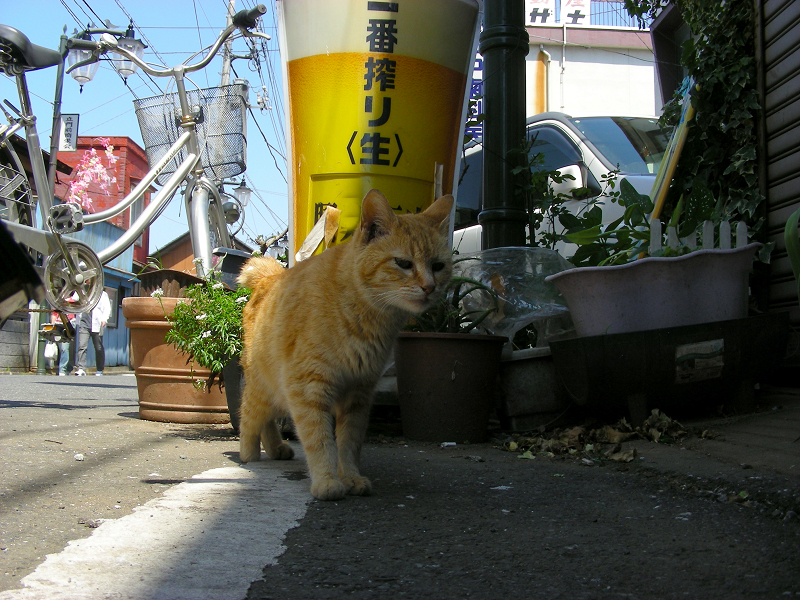 寄って来た茶トラ猫2