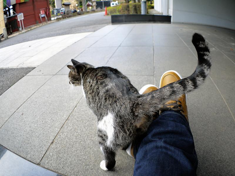スニーカーとキジ白猫の尻尾1