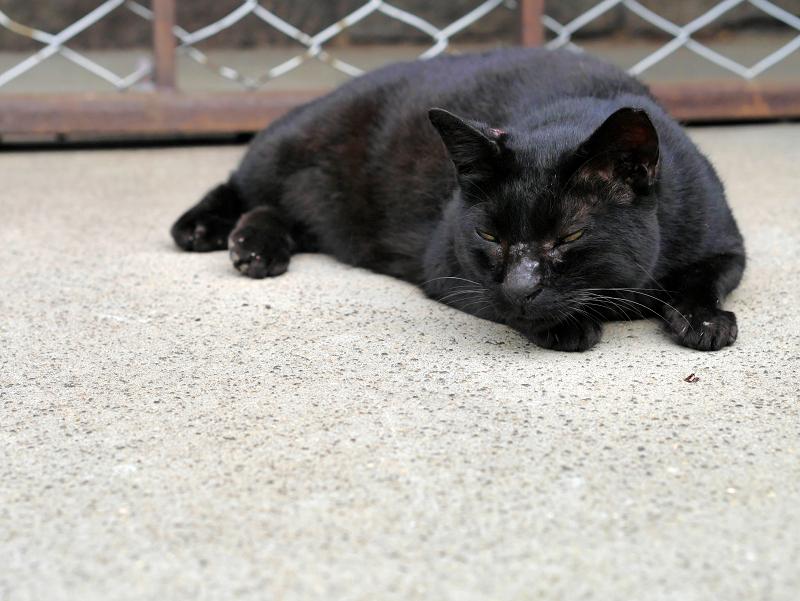 腹ばう黒猫の表情1