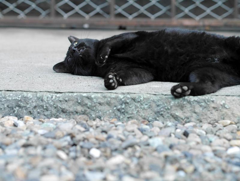横になってる黒猫2