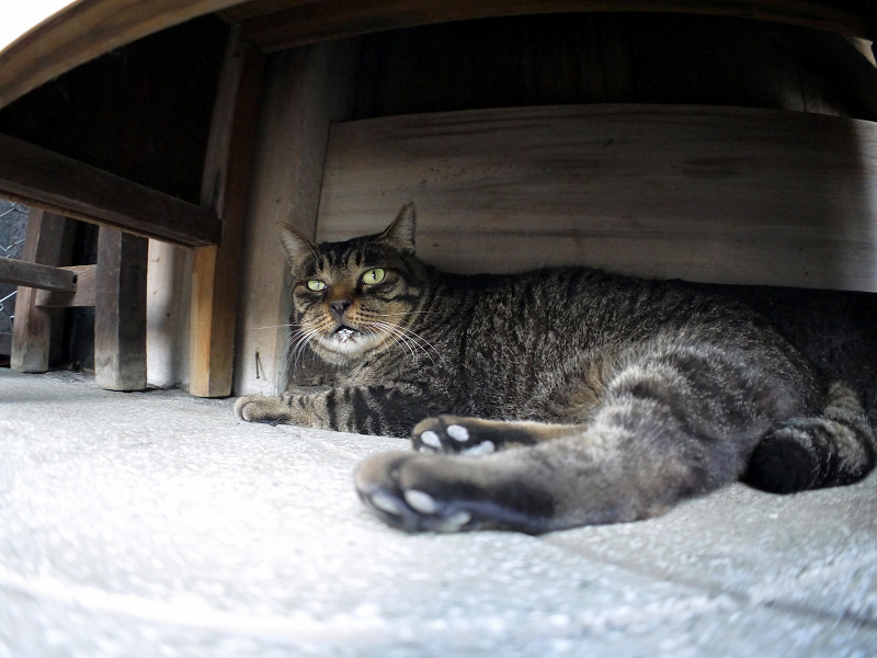 ラジオ体操机下で寝ているキジトラ猫3