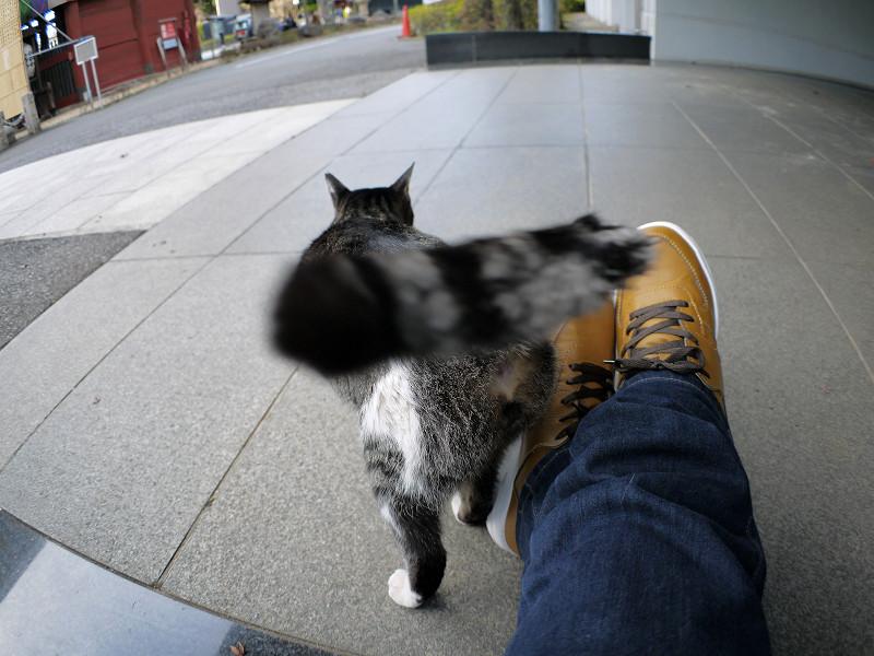 スニーカーとキジ白猫の尻尾3