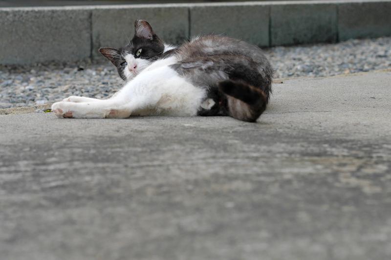 路地で寝そべる茶白猫3