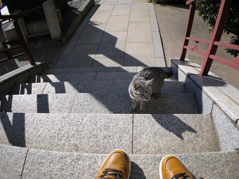 今日も階段を上がるサバトラ猫1