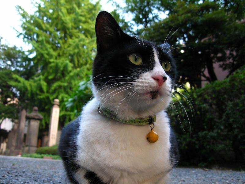 玉砂利と黒白猫2