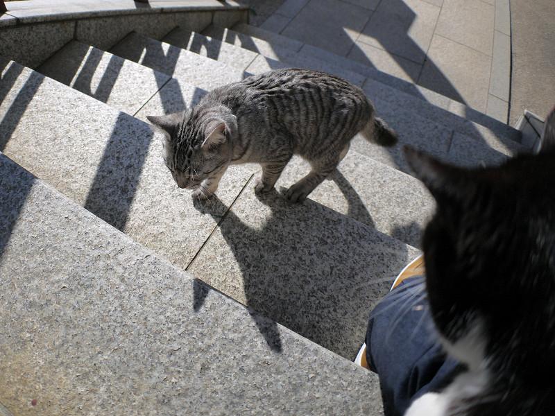 今日も階段を上がるサバトラ猫2