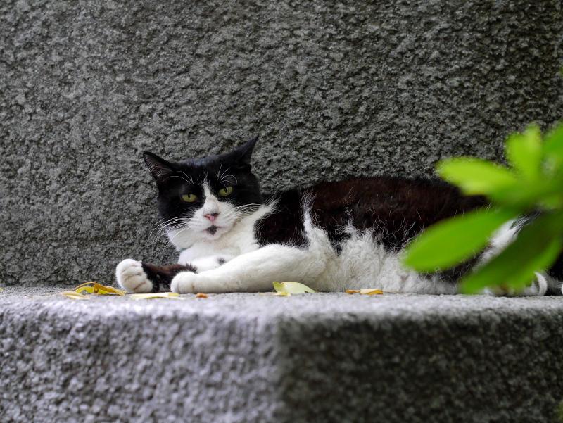 寛いでる黒白猫2