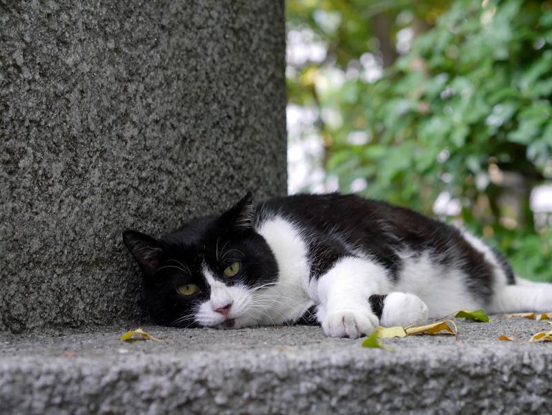 寛いでる黒白猫3