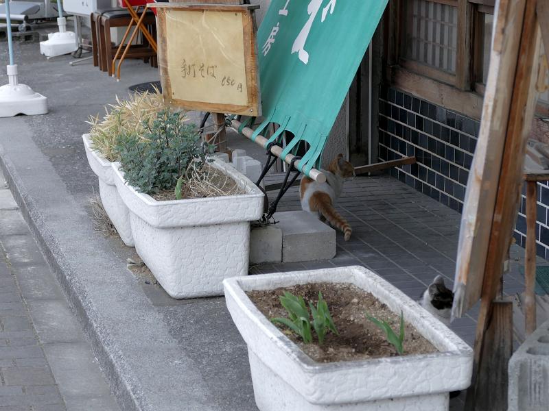 開店前のそば屋店先猫1