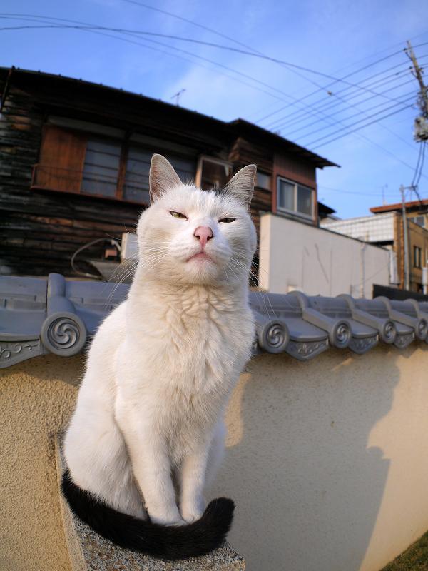 塀に座ってる白黒猫2